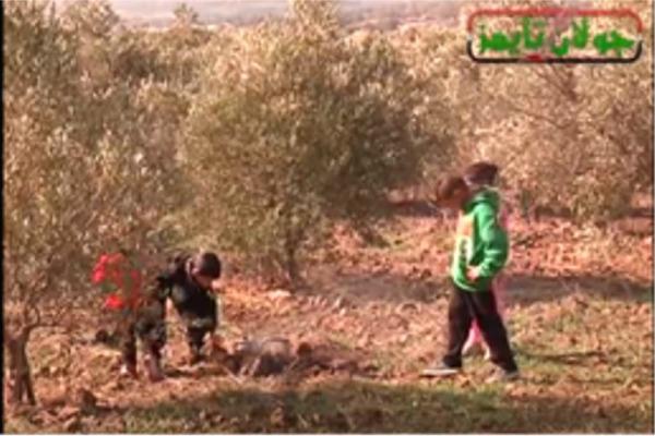 Photo of موسم الزيتون في عين قنية لمن فاته التقرير في زهر الرمان