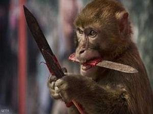 Photo of قرد سكران يطارد الناس بالسكين ويتحرش بالاطفال