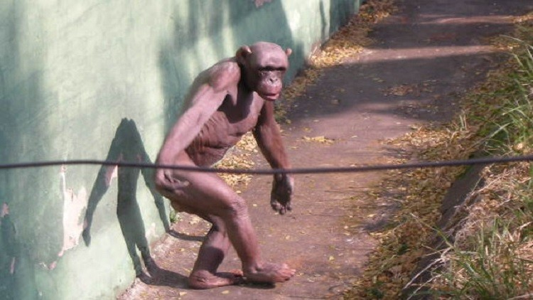Photo of دراسة جديدة.. فيروس الايدز مصدره القرود !