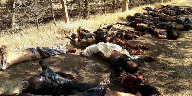 Photo of بالفيديو- الجيش يصد هجوم  «الكتيبة المهجورة» شمال درعا