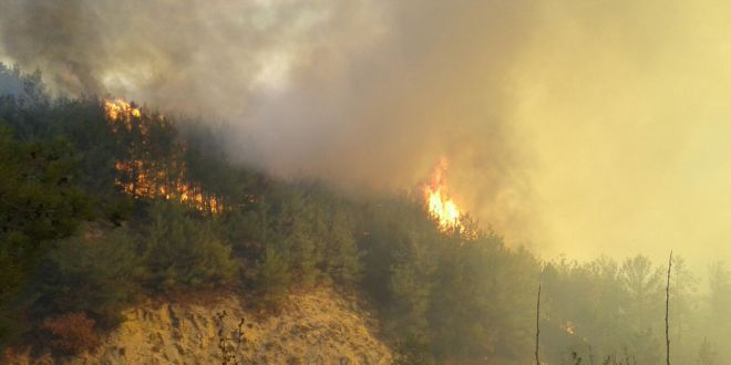 Photo of صيف حارّ بأرياف طرطوس.. وحرائق!