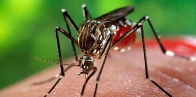 Photo of كيف تحمي نفسك من لدغات البعوض؟