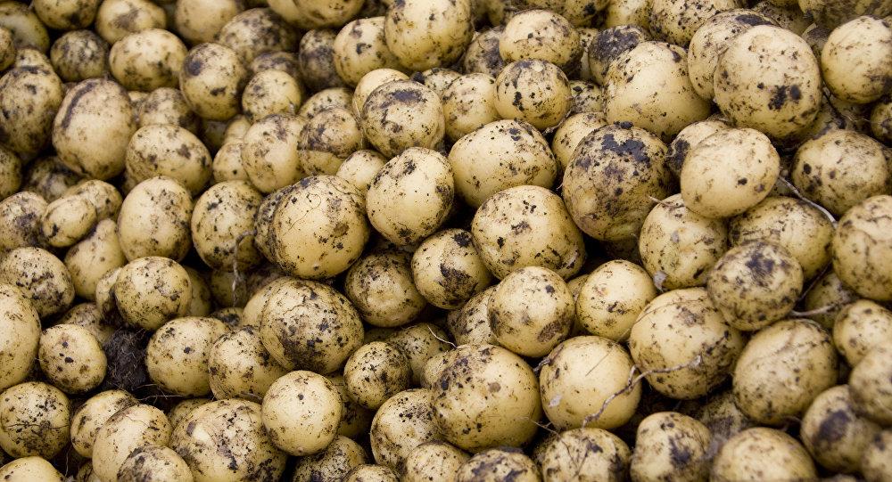 Photo of لهذا السبب لا ترمي البطاطا عند ظهور براعم عليها