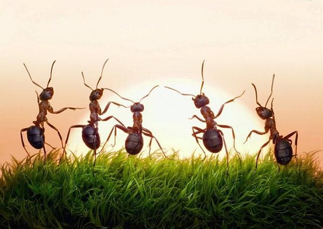 """Photo of """"أجسام النمل"""" مضادات حيوية لأكثر الالتهابات خطرا"""