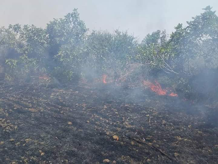 Photo of Terrorists set fire once again to farmlands in vicinity of Hadar village in Quneitra