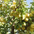 تصريح خاص لـ وزير التجارة الداخلية وحماية المستهلك الدكتور عبد الله الغربي حول إجراءات حكومية لـ تسويق كامل محصول التفاح للموسم الحالي