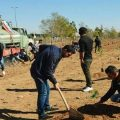 One thousand trees to be planted on Damascus International Airport Road