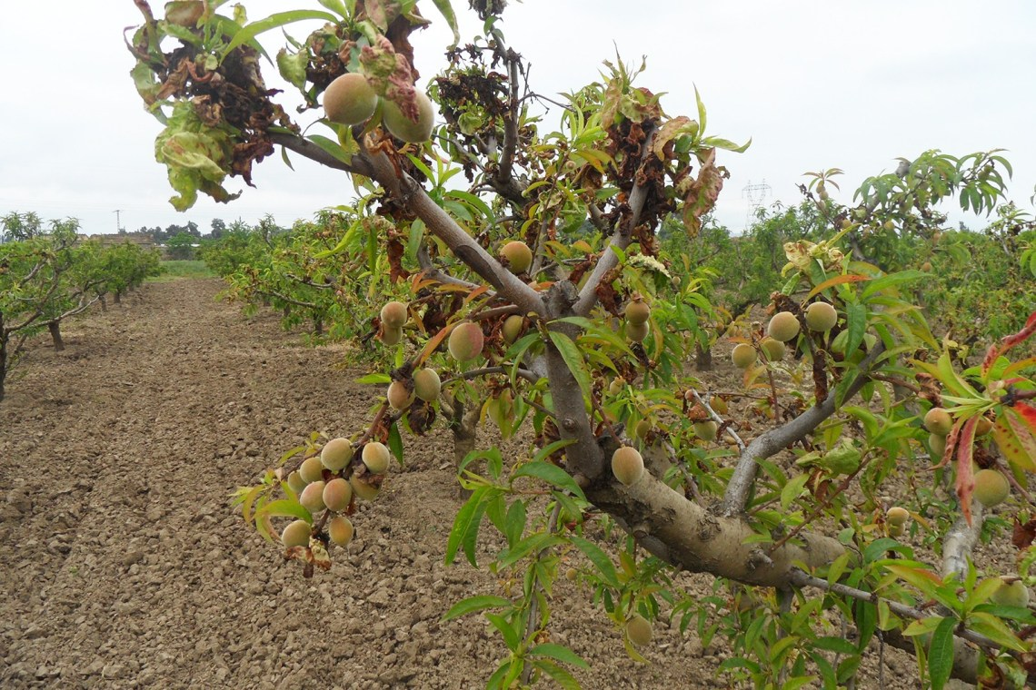 "Photo of مزارعو التفاح في ""حماة"" ضحية تهريب الأدوية الزراعية"