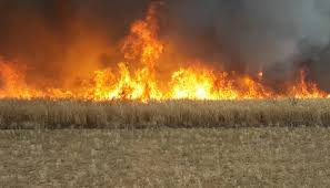 Photo of Fire erupts in agricultural lands in Hama countryside due to terrorist shelling attack