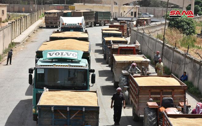 Photo of بتوجيه من الأسد.. اهتمام حكومي بتسويق القمح بريف حماة