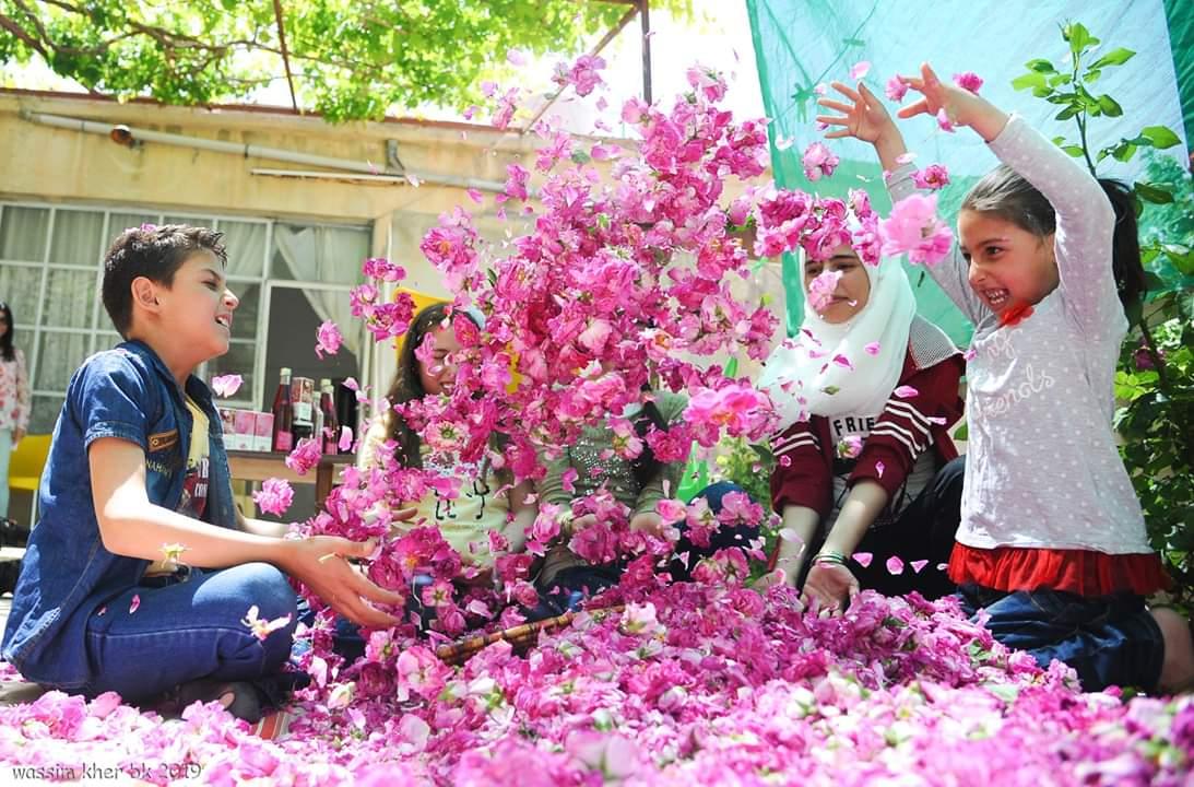 """Photo of الوردة الشامية: سوريّات يقطفن محصول البلاد """"الأغلى من الذهب"""""""