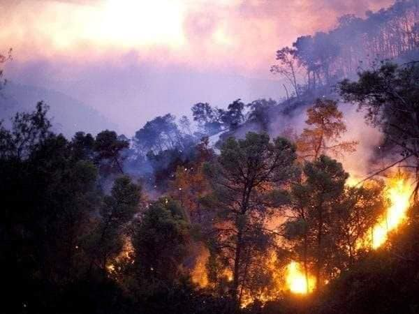 Photo of حريق كبير في الغابة الحراجية لقرية نبع الطيب بريف حماة