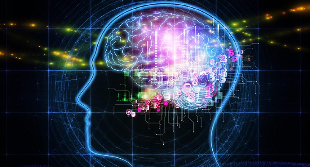 Photo of النظام الغذائي الغني بالدهون يسبب اضطرابات الدماغ