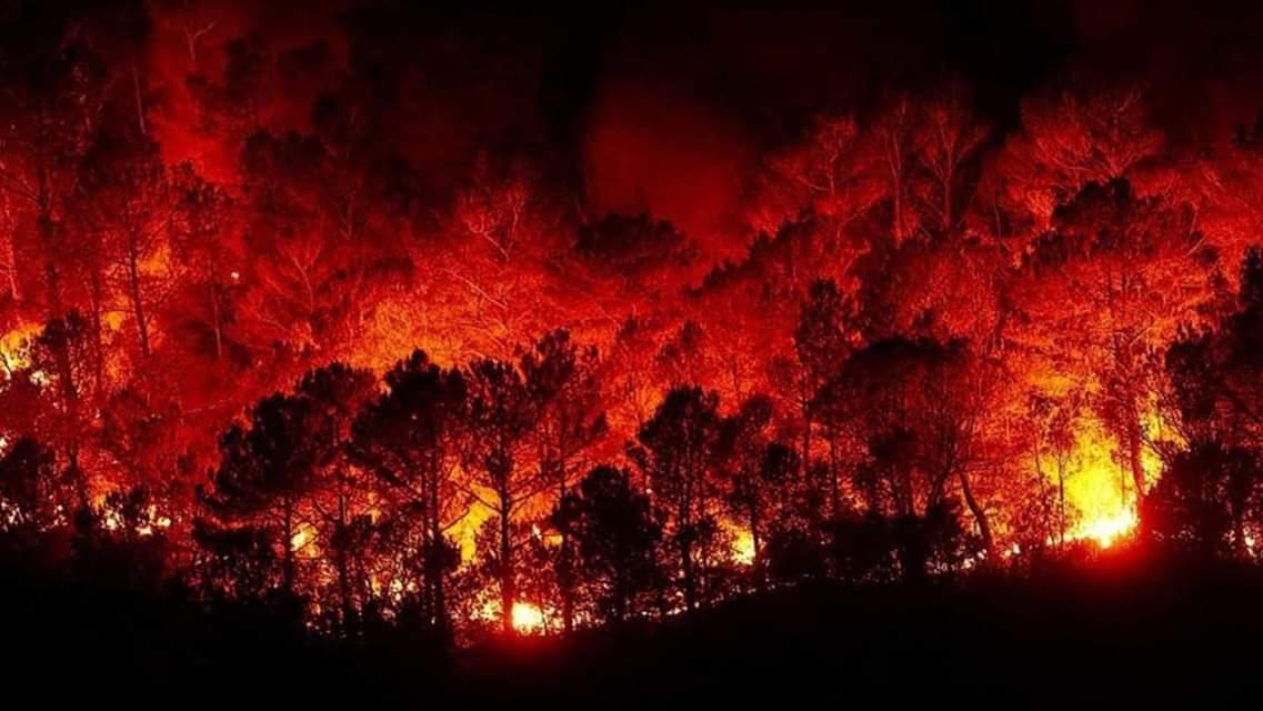 Photo of الحكومة تشكل لجنة دراسة وتعويعض عن الحرائق