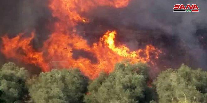 Photo of إخماد حريق شب في أراض زراعية وحراجية بريف اللاذقية