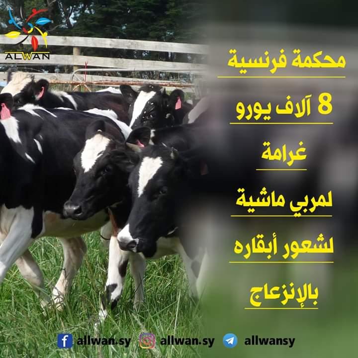 Photo of محكمة فرنسية 8 آلاف يورو غرامة لمربي ماشية لشعور أبقاره بالإنزعاج