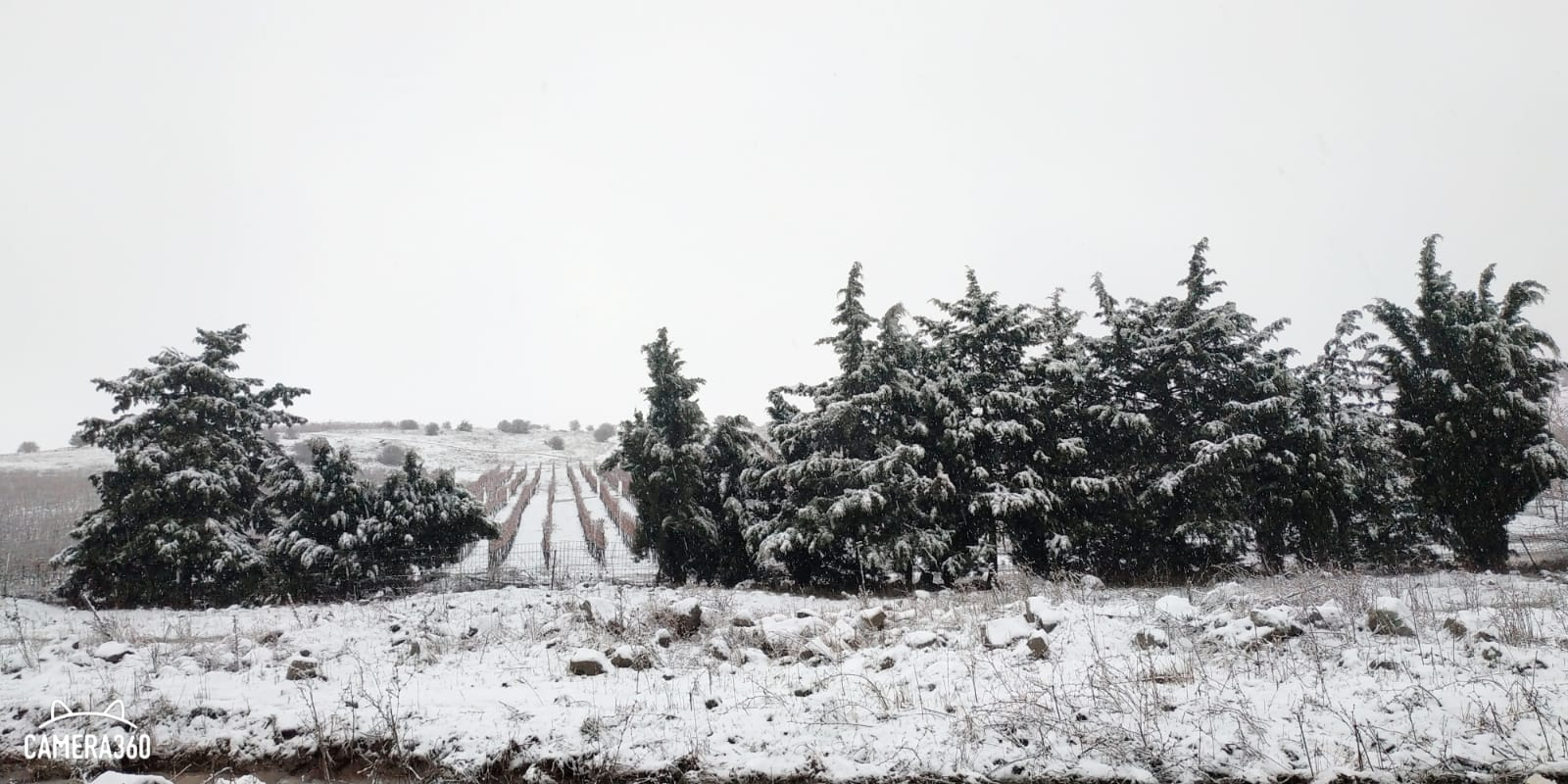 Photo of ثلوج الجولان 8-1-2020