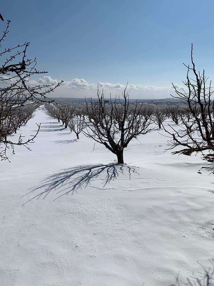 Photo of درجات الحرارة تحت الصفر.. والثلوج مساءً