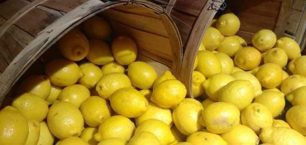 Photo of الليمون يهزم البصل ويتخطى عتبة ٣٠٠٠ ليرة للكيلو