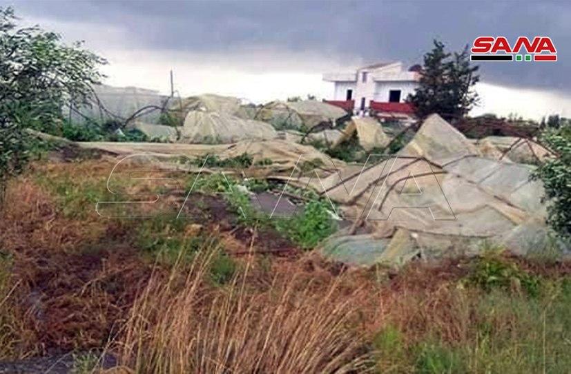 Photo of بالصور – تضرر ٧٥ بيت بلاستيكي بسبب تنين بحري ضرب ريف طرطوس