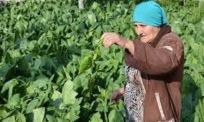 Photo of الحكومة تتحرك لتأمين المحروقات للمزارعين
