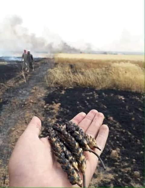 Photo of Fires damage fields in Hasaka and Dara