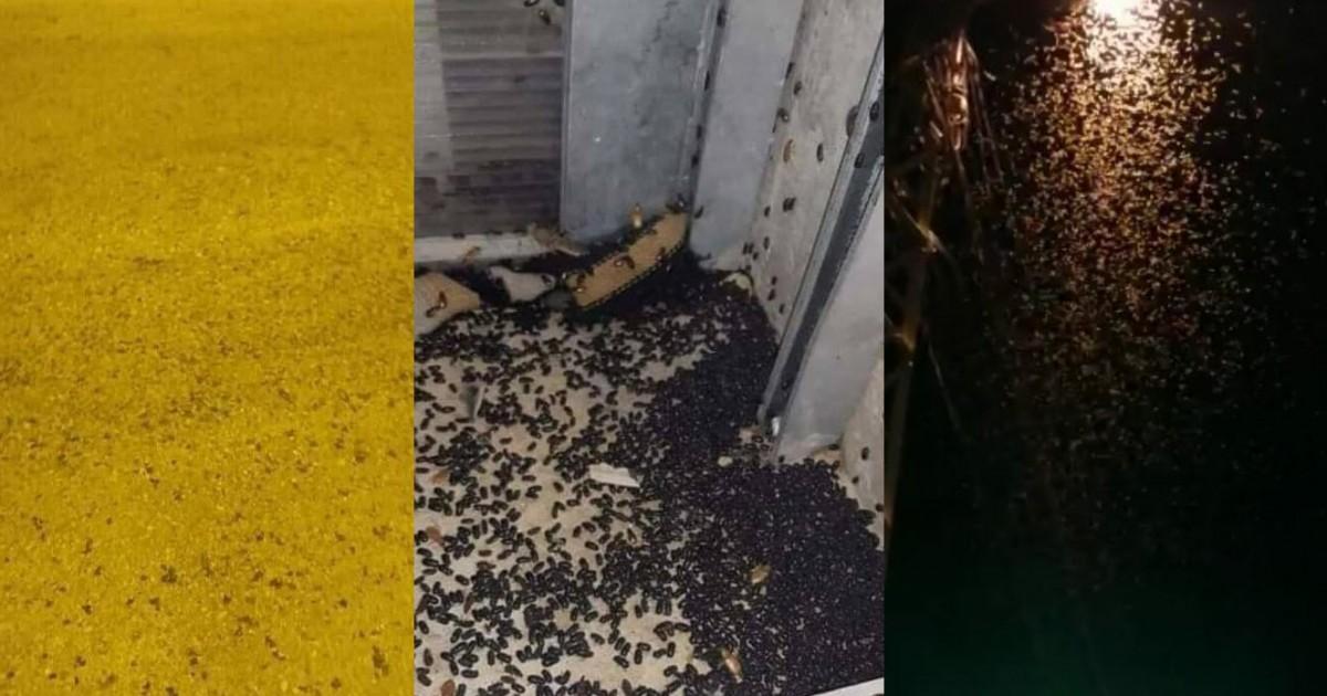Photo of بالفيديو- أسراب من الحشرات والصراصير تجتاح بلدة عرسال اللبنانية