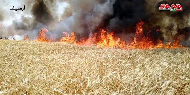 Photo of الاحتلال التركي يُحرق الأراضي الزراعية في منطقة تل تمر بريف الحسكة