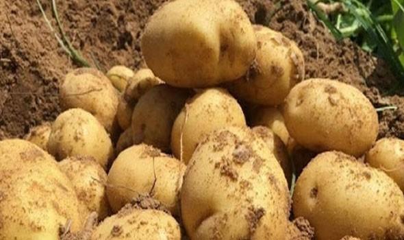 Photo of بحماة.. البطاطا دون الـ 400 ليرة والبندورة فوق الـ 700