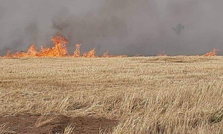 Photo of Wheat fields burned due to fire erupted near Turkish point, northwestern Hasaka