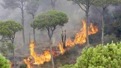 "Photo of غابات سورية تحترق…"" حرائق مصياف"" تطال مساحات جديدة – صور"