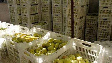 Photo of مصادقة على تعويضات أضرار التفاح في السويداء