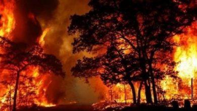 Photo of مؤسسة التبغ: إعفاء بعض المدراء لكشف ملابسات حريق ريجة القرداحة