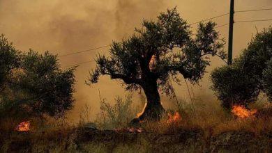 Photo of إخماد أكثر من 60 حريقاً في طرطوس و فوج الإطفاء يعمل جاهداً لإخماد الحرائق