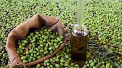 Photo of الزراعة تتوقع انخفاض سعر «تنكة الزيت» إلى 30 ألف ليرة!