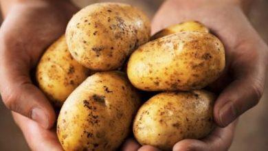 Photo of وزارة التجارة تمنع تصدير البطاطا