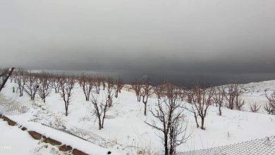 Photo of بالصور – ثلوج مرتفعات بلودان
