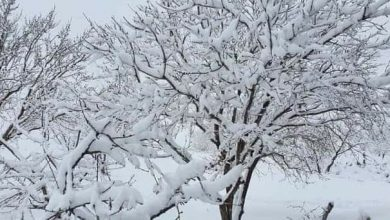 Photo of تساقط الثلج في مدينة شهبا (فيديو)