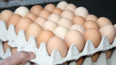 Photo of 8 آلاف ليرة لطبق البيض وتجار يحتكرون المادة