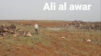Photo of وصول مجموعات من الجراد لمحيط قرى الريف الشرقي للسويداء