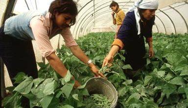 """Photo of لأول مرّة في سوريا …دراسة لإصدار """"تأمين الزراعي """""""