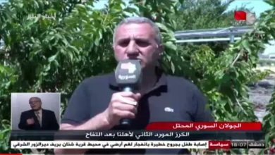Photo of Golan cherries between difficulties and root (Syrian report)