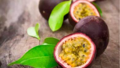 Photo of 5 فواكه وخضروات أرجوانية عليك إضافتها لنظامك الغذائي اليومي