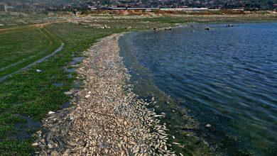 Photo of إجراءات حكومية لمنع إدخال أطنان من السمك المنافق من لبنان إلى سوريا