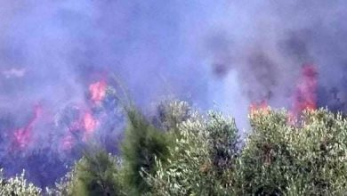 Photo of «موسم الحرائق».. إخماد حريق بريف بانياس