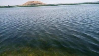 Photo of ارتفاع منسوب مياه بحيرة الأسد في الطبقة يؤدي لتحسن التغذية الكهربائية في الحسكة