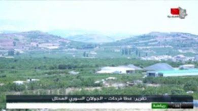 Photo of أول تجربة للبيوت البلاستيكية في الجولان المحتل (تقرير السورية)