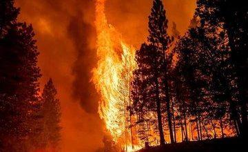 Photo of الجزائر توجه  «نداء استغاثة» لمواجه الحرائق