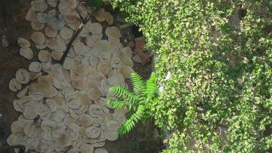 Photo of برسم وزارة التجارة الداخلية وحماية المستهلك.. هكذا يتم «تجميع الخبز وبيعه» بضاحية الأسد (صور)