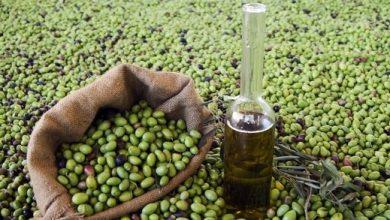 Photo of نحو 70 ألف طن الإنتاج المقدر من الزيتون وسعر البيدون بين 160 و 192 ألف ليرة
